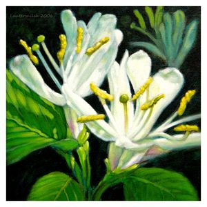 Honeysuckle blossoms - Paintings by John Lautermilch