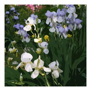Irises in Spring - Paintings by John Lautermilch