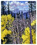 Colorado Aspens 51-2003 - Paintings by John Lautermilch