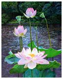 Lotus in Bloom 45-2004 - Paintings by John Lautermilch