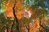 Fall Beauty - Paintings by John Lautermilch