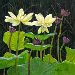 Touching Lotus Blooms 113-2005 - Paintings by John Lautermilch