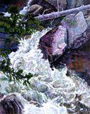 Rushing Stream - Colorado