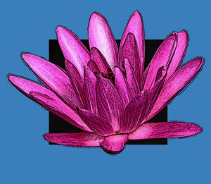 Pink Water Lily Drawing - Paintings by John Lautermilch