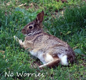 No Worries - Paintings by John Lautermilch