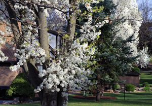 Spring Time in Missouri - Paintings by John Lautermilch