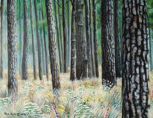 Longleaf Wiregrass-Southern Elysium
