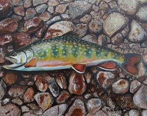 Brook Trout on River Rock