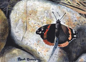 Red Admiral on Rocks
