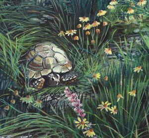 Gopher Tortoise and Habitat
