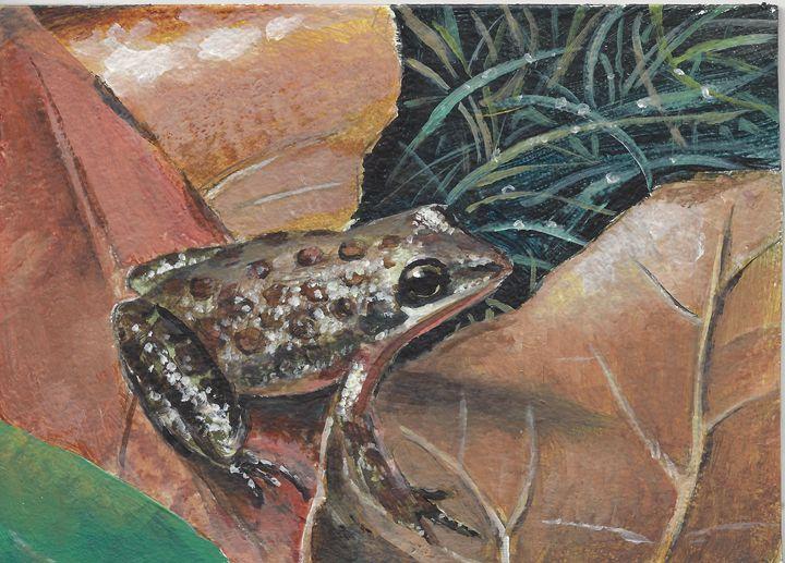 Winter Frog - Delestrezart
