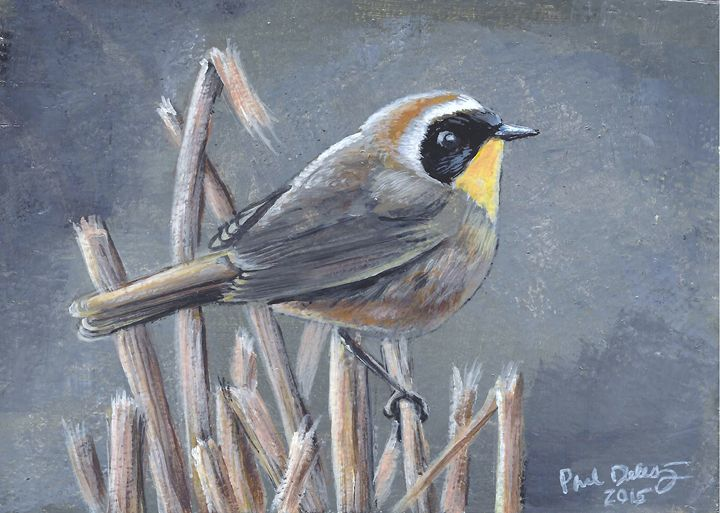 Common Yellow-throat - Delestrezart