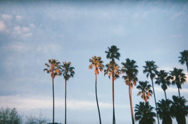 Palm Trees - Amoureuse