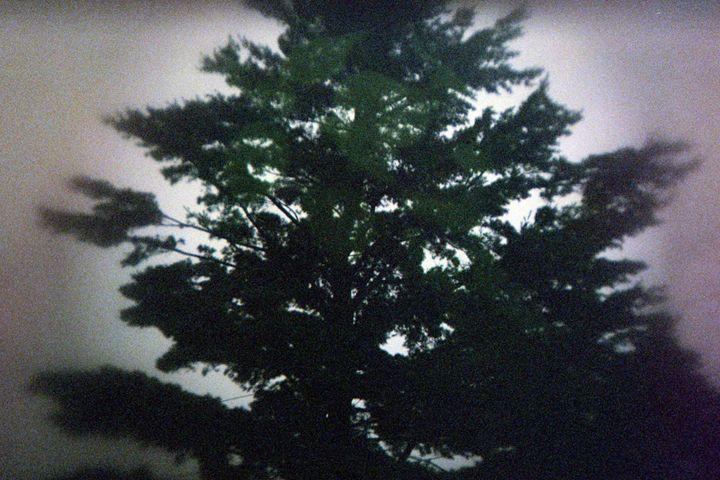Pine - Amoureuse