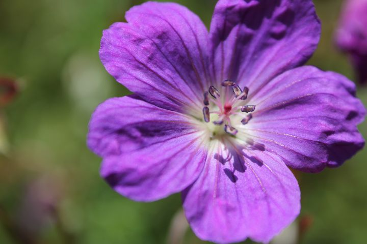 Purple - Amoureuse
