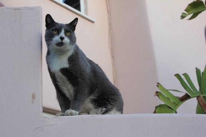 Kitty - Amoureuse