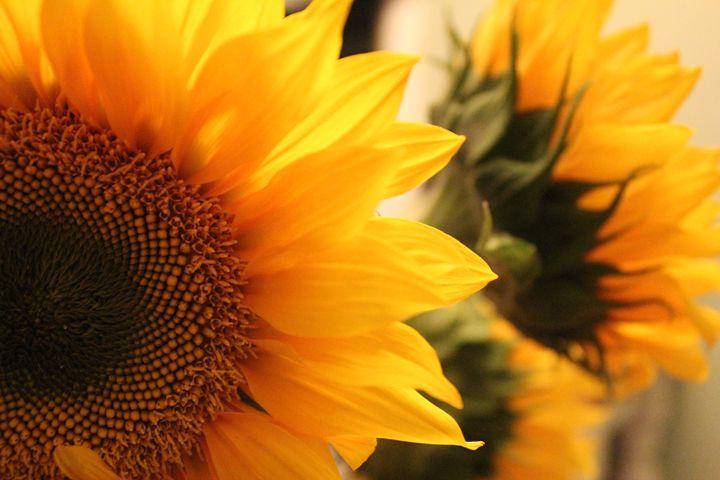 Sunflowers - Amoureuse