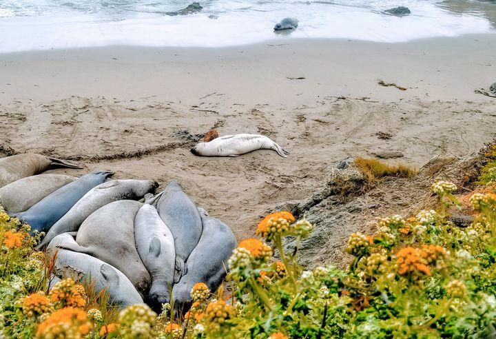 Sea Lion Nap Time - Rachel Csontos