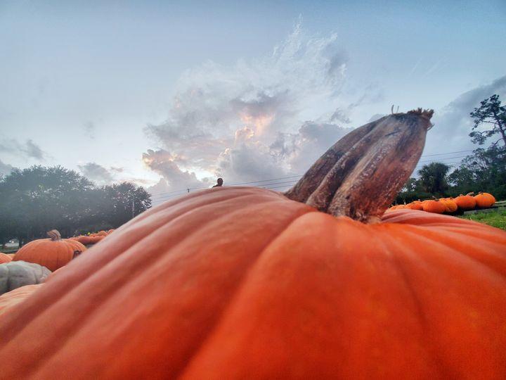 Pumpkin Patch - Rachel Csontos