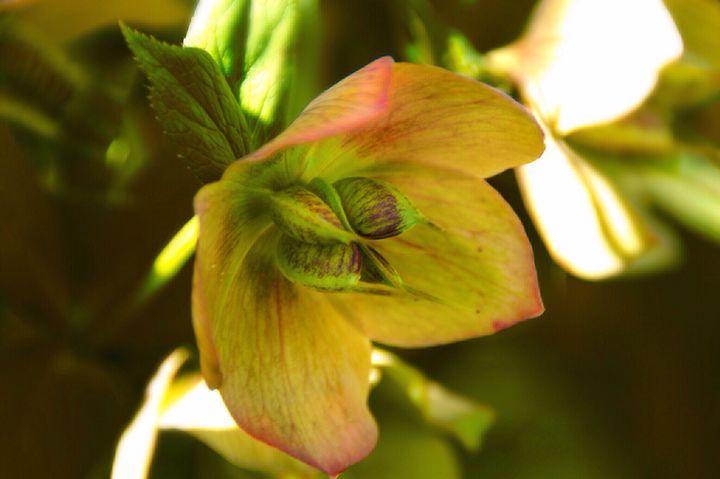 Flower Close Up - Patrick Freyer
