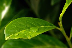 Plant Micro with water drop