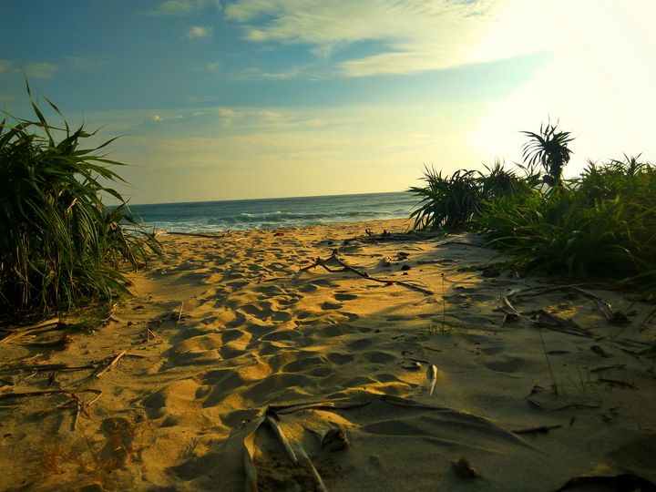 Golden Hour at the Beach - Crafitty