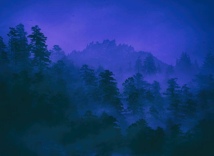 Dark Forest - Ynes