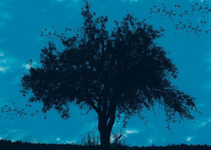 Magic Tree 3 - Ynes