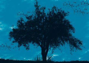Magic Tree 3