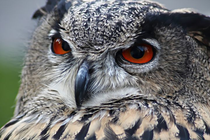 Spotted Eagle Owl - Pit Bull Ink