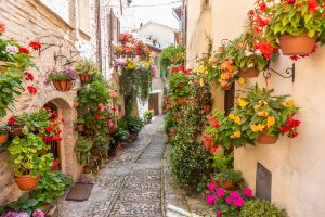 Flowers in ancient street