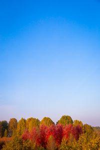 Fall season with blue sky in Italy