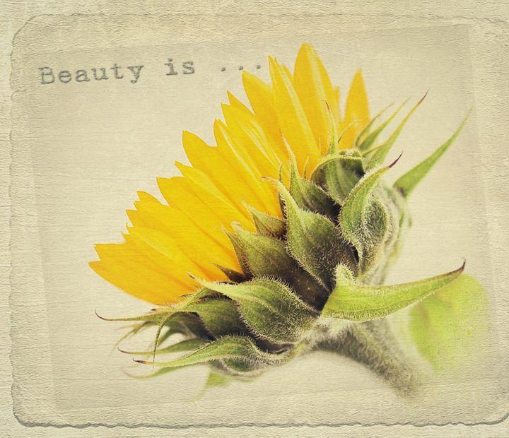 Sunflower Beauty. - Rmzphotography