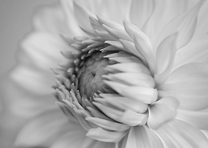 Black And White Flora - Rmzphotography