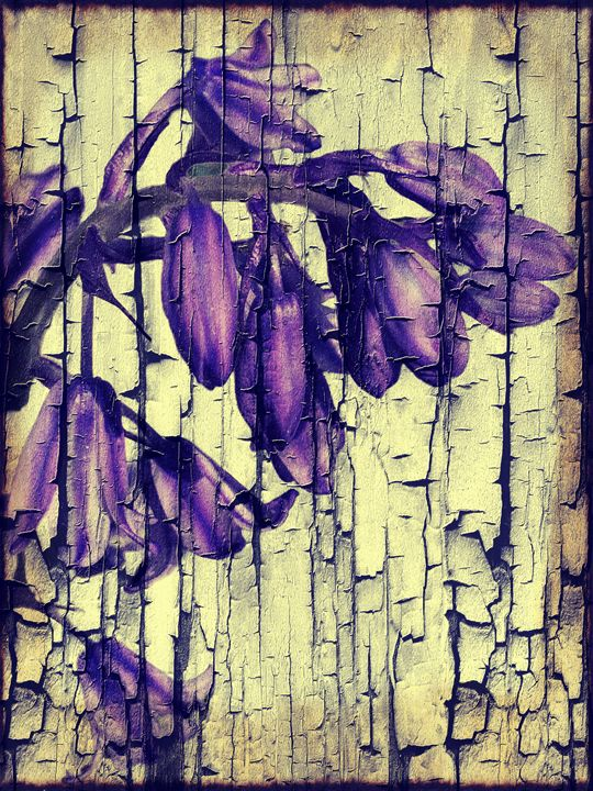 Bluebell Textures - Rmzphotography