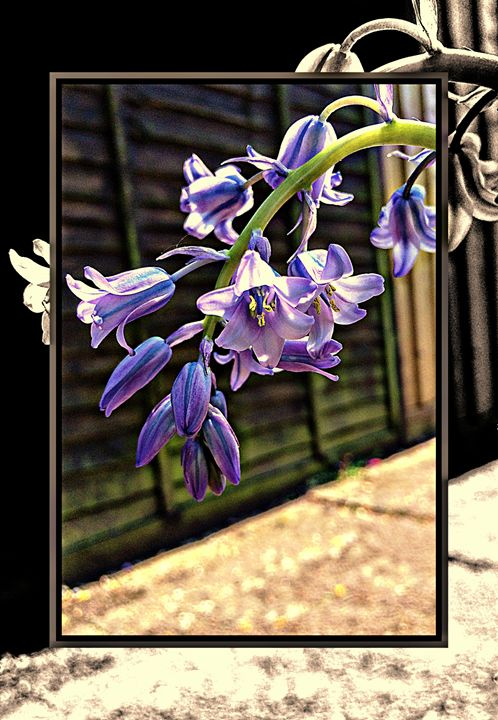 Toned Bluebells - Rmzphotography
