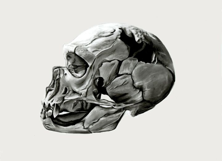 Neanderthal Skull - Mutch Illustration