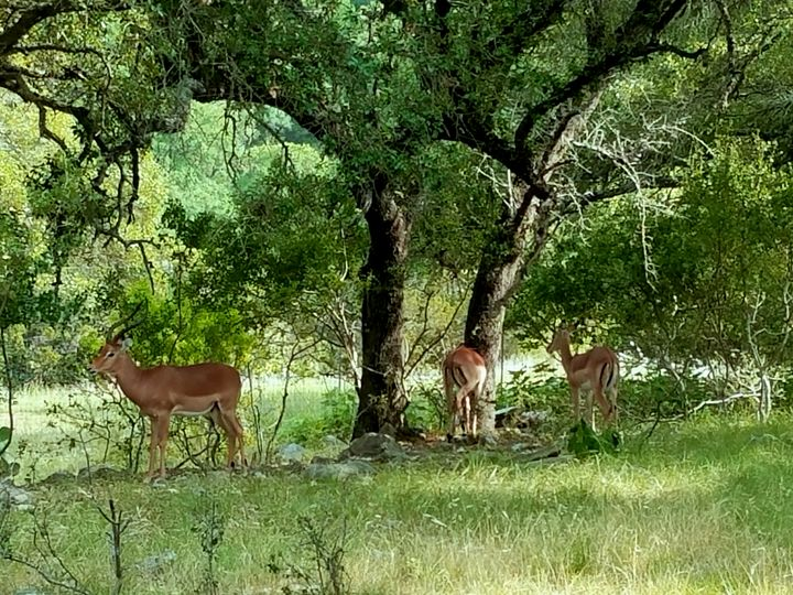 Antelopes Paradise - Ryan Mckinnies