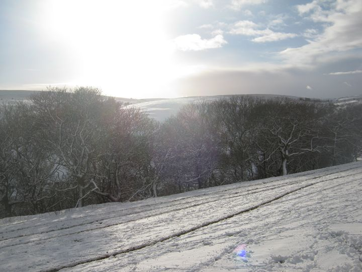 Snowy trees - nature's window
