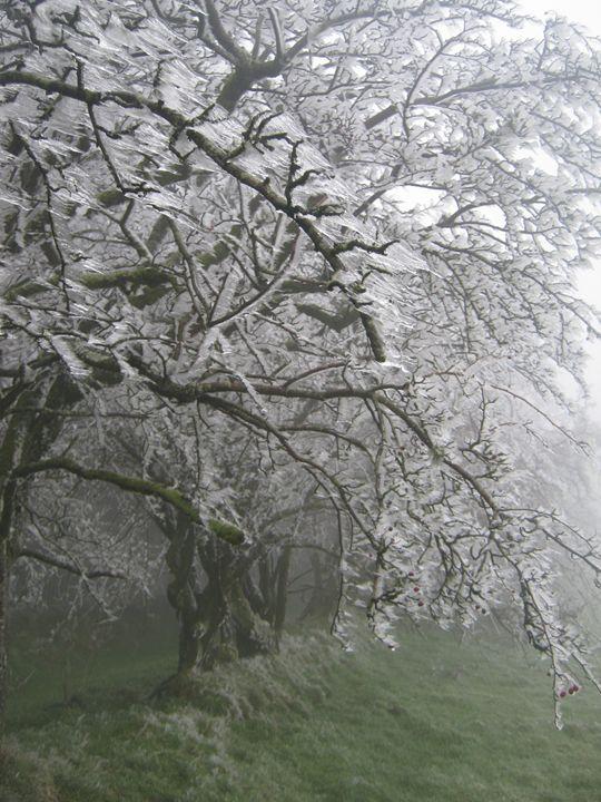 Frozen still - nature's window