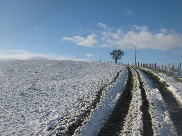 Winter track - nature's window