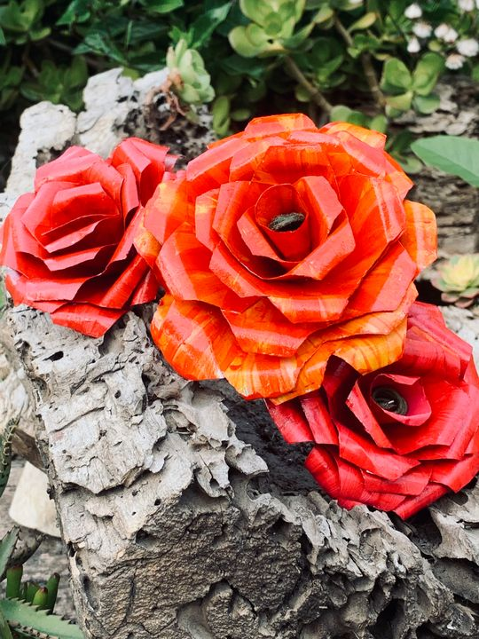 Orange Roses - Violet Star