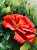 Painted Flower (single)