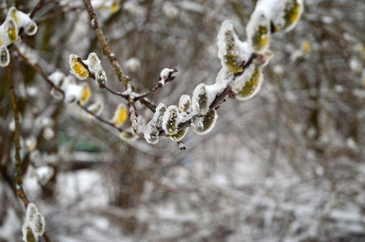 Winter in Munich - Aida Selenica
