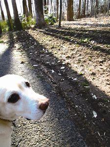 Dog Takes a Walk