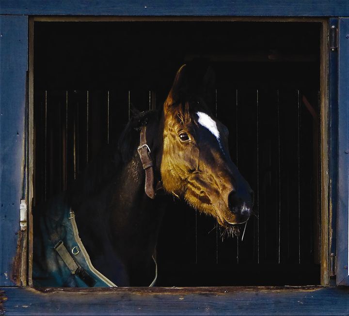 Horse Looking out Barn Window - Jennifer Hogan