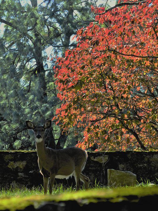 Deer Poses With Fall Foliage - Jennifer Hogan