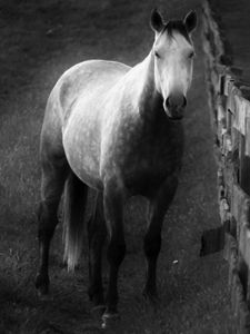 Horse on Farm BW 1