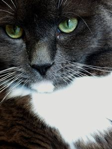 Green-eyed Cat 1