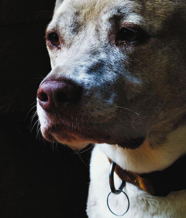 Dog in Thought - Jennifer Hogan